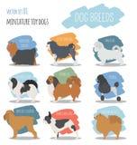Dog breeds. Miniature toy dog set icon. Flat style Royalty Free Stock Image