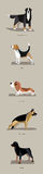 Dog breeds in minimalist style Stock Photos