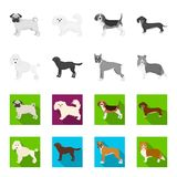 Dog breeds monochrome,flat icons in set collection for design.Dog pet vector symbol stock web illustration. Dog breeds monochrome,flat icons in set collection Royalty Free Stock Photography