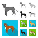 Dog breeds monochrome,flat icons in set collection for design.Dog pet vector symbol stock web illustration. Dog breeds monochrome,flat icons in set collection Stock Images