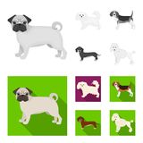 Dog breeds monochrome,flat icons in set collection for design.Dog pet vector symbol stock web illustration. Dog breeds monochrome,flat icons in set collection Royalty Free Stock Images