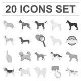 Dog breeds monochrome icons in set collection for design.Dog pet vector symbol stock web illustration. Dog breeds monochrome icons in set collection for design Royalty Free Stock Images