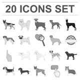Dog breeds monochrome icons in set collection for design.Dog pet vector symbol stock web illustration. Dog breeds monochrome icons in set collection for design Stock Photography