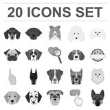 Dog breeds monochrome icons in set collection for design.Muzzle of a dog vector symbol stock web illustration. Dog breeds monochrome icons in set collection for Royalty Free Stock Photos
