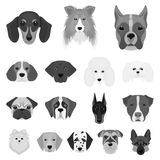 Dog breeds monochrome icons in set collection for design.Muzzle of a dog vector symbol stock web illustration. Dog breeds monochrome icons in set collection for Stock Image