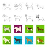 Dog breeds outline,flet icons in set collection for design.Dog pet vector symbol stock web illustration. Dog breeds outline,flet icons in set collection for Royalty Free Stock Images