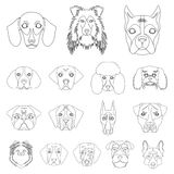 Dog breeds outline icons in set collection for design.Muzzle of a dog vector symbol stock web illustration. Dog breeds outline icons in set collection for Royalty Free Stock Images