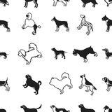 Dog breeds pattern icons in black style. Big collection of dog breeds vector symbol stock illustration. Dog breeds pattern icons in black style. Big collection Stock Photos