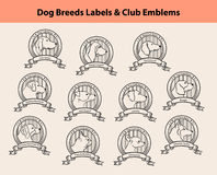 Dog Breeds Portraits Royalty Free Stock Photography