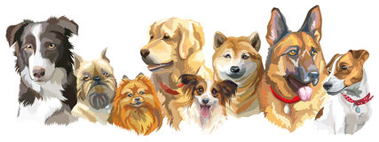 Dog breeds set. Set of colorful vector portraits of different dog breeds brussels griffon, Shiba Inu, Pomeranian, Border collie, German shepherd, Golden vector illustration