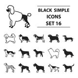 Dog breeds set icons in black style. Big collection dog breeds vector symbol stock illustration. Dog breeds set icons in black style. Big collection dog breeds Royalty Free Stock Photography