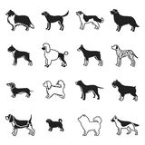 Dog breeds set icons in black style. Big collection dog breeds vector symbol stock illustration. Dog breeds set icons in black style. Big collection dog breeds Royalty Free Stock Image