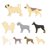 Dog breeds set icons in cartoon style. Big collection of dog breeds vector symbol stock illustration Stock Photos