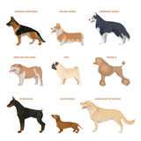 Dog breeds set. Stock Images