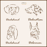 The dog breeds Stock Image