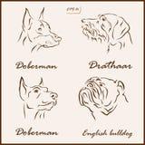 The dog breeds Royalty Free Stock Image