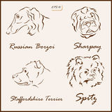 The dog breeds Royalty Free Stock Images