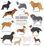 Dog breeds. Shepherd dog set icon. Flat style Stock Photos