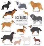 Dog breeds. Shepherd dog set icon. Flat style Stock Photos