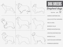 Dog breeds. Shepherd dog set icon. Flat style Stock Photography