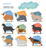 Dog breeds. Shepherd dog set icon. Flat style Royalty Free Stock Photo