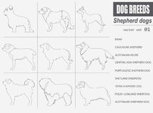 Dog breeds. Shepherd dog set icon. Flat style Stock Image