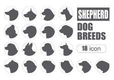 Dog breeds. Shepherd dog set icon. Flat style Stock Images