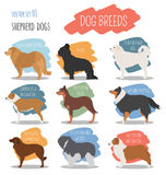 Dog breeds. Shepherd dog set icon. Flat style Royalty Free Stock Photography