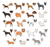 Dog breeds, side view and muzzle set. Collection with hand drawn colorful realistic illustration. Collection with hand drawn colorful realistic illustration Stock Images