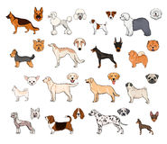 Dog breeds, side view and muzzle set. Collection with hand drawn colorful realistic illustration. Dog breeds, side view and muzzle set. Collection with hand Stock Images