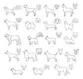 Dog breeds, side view and muzzle set. Collection with hand drawn contour realistic illustration. Dog breeds, side view and muzzle set. Collection with hand Stock Photography