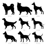 Dog breeds silhouettes set. High detailed, smooth vector illustration. Isolated on white royalty free illustration