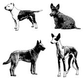 Dog breeds sketch illustration Stock Photos