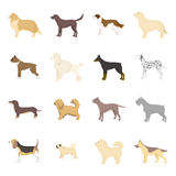 Dog breeds vector icon set in cartoon style. Royalty Free Stock Images
