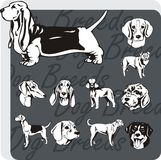 Dog Breeds - vector set Royalty Free Stock Photos