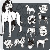 Dog Breeds - vector set Royalty Free Stock Image