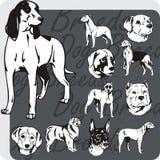 Dog Breeds - vector set Royalty Free Stock Image