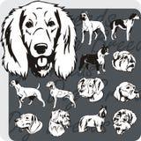 Dog Breeds - vector set Royalty Free Stock Photos