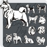 Dog Breeds - vector set Stock Photography