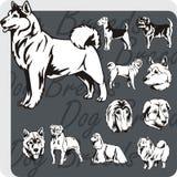Dog Breeds - vector set Stock Photography
