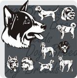 Dog Breeds - vector set Stock Photo