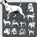 Dog Breeds - vector set Stock Photo