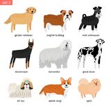 Dog breeds. Vectors dogs breeding collection isolated on white background, great dane and komondor. Golden retriever and mini schnauzer isolated on white royalty free illustration