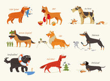 Dog breeds. Working dogs royalty free illustration