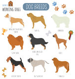 Dog breeds. Working (watching) dog set icon. Flat style Stock Images