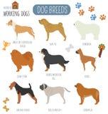 Dog breeds. Working (watching) dog set icon. Flat style Stock Images