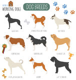 Dog breeds. Working (watching) dog set icon. Flat style Royalty Free Stock Photography