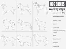 Dog breeds. Working (watching) dog set icon. Flat style Royalty Free Stock Photo