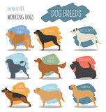 Dog breeds. Working watching dog set icon. Flat style Royalty Free Stock Photo