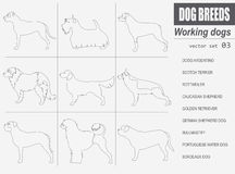 Dog breeds. Working  Stock Photography